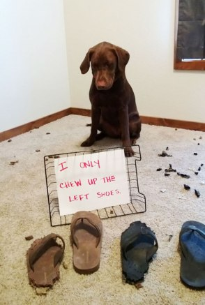 dog-shaming-40__605