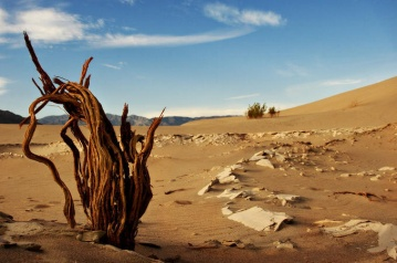 desert advent